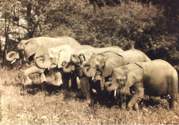 Benson elephants with elephant trainer Bret Bronson.