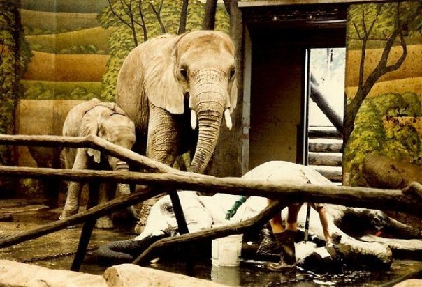 Christy, Affie & Mame. Brookfield Zoo 1985. Photo: © Susan Hoss
