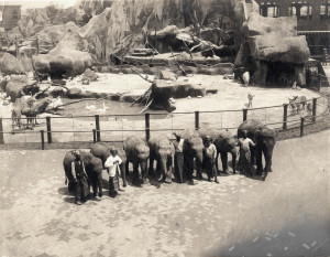 Elephants and their handlers from Hagenbeck