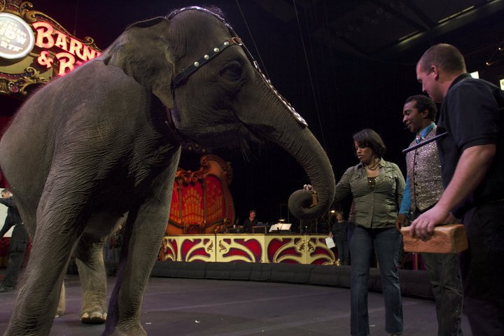 Female ♀ Asian elephant Kelly Ann at Ringling Brothers Barnum and Bailey Center for Elephant Conservation