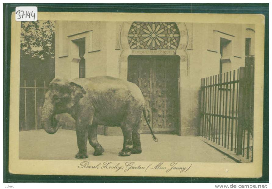 Female Asian elephant Miss Jenny at Basel Zoo