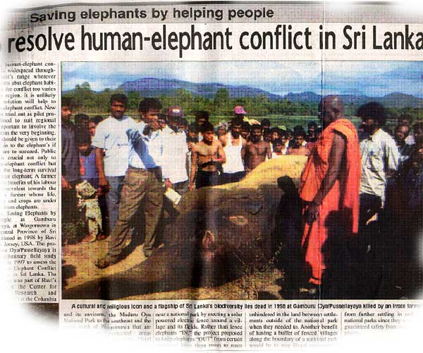 elephant human conflict in Sri Lanka