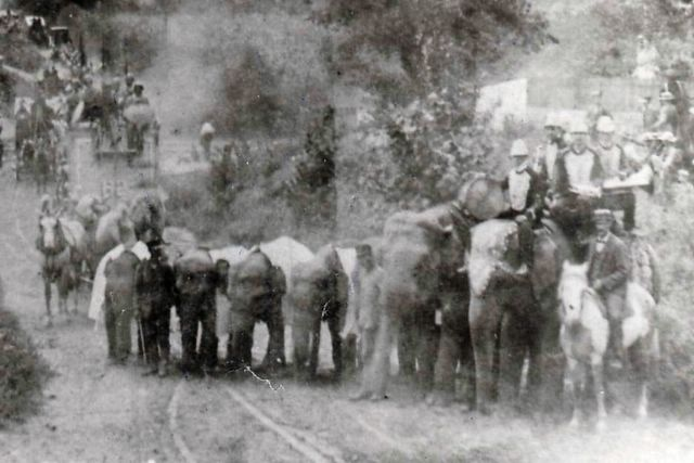 "Tim Buckley on the horse in 1903, , the three small elephants at left would eventually become the Robinson Military Elephants ""Clara"", ""Petite"" (Pitt) and ""Tony"" the young tuskers are ""Tommy"" and ""Basil"" and the two big elephants are ""Tillie"" and ""Queen"". (<a href=""http://bucklesw.blogspot.com/2006/06/john-robinsons-10-big-shows-4.html"">Buckles Woodcock</a>)"