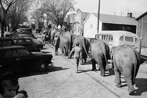 Elephants seen on West Haynes Street in Sandersville were part of a King Brothers Christian Circus parade in the 1950s.