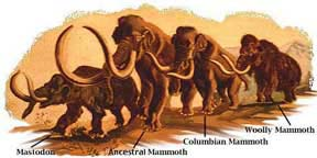 Mammoths, the prehistoric elephants