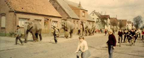 Elephants were walked through Etelsen for deliver in the Zoo